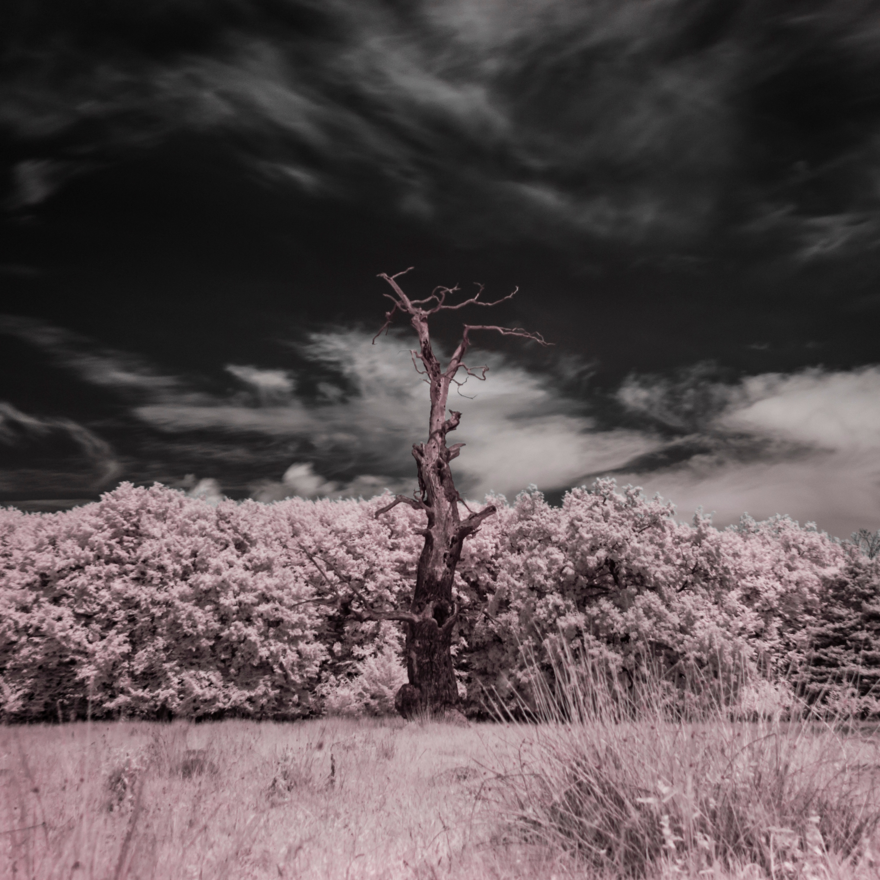 DSC_0197_Snapseed